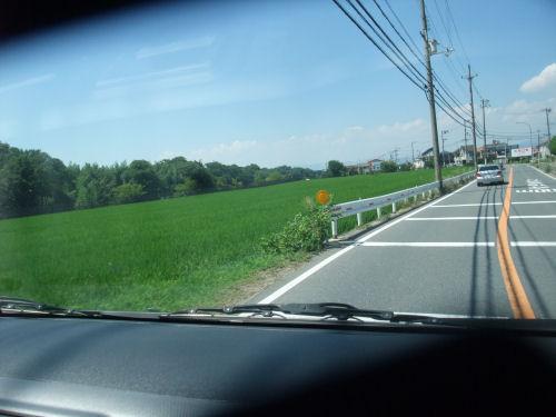 夏の田んぼ・緑の絨毯