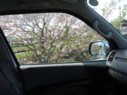桜・さくら・サクラ・新緑・若葉・葉桜